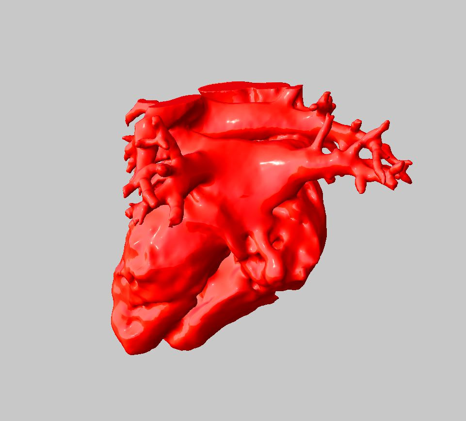 Anatomical Human Heart 3D Model 3D Printable STL