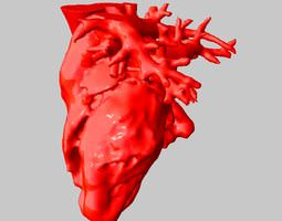 Anatomical Human Heart 3D Model