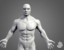 Muscular Base Mesh 3D Model