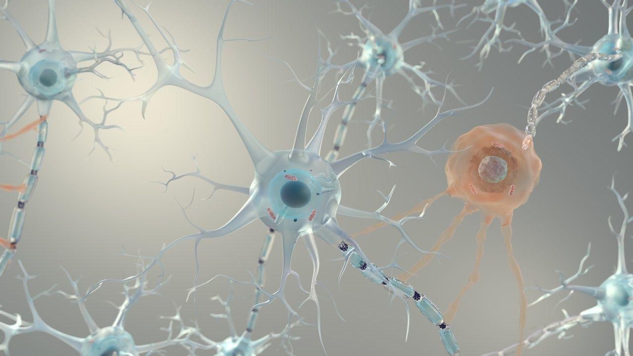 Brain Neurons for Cinema 4d