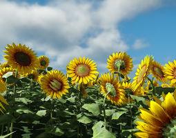 Sun Flower 3D model