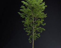 3D model BeechTree 01