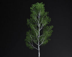 BirchTree 01 3D Model