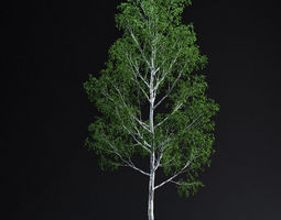 Grid_birchtree_02_3d_model_max_837cd748-44ea-4e94-b889-368ca61e0d3b
