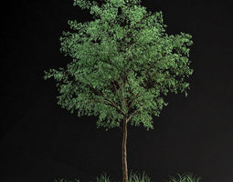 Grid_small_tree_01_3d_model_max_0b8ccfa6-413c-43df-b749-bf2edb4d8baf