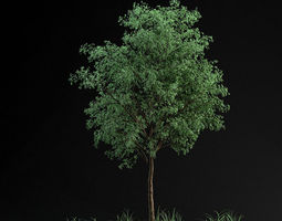 Grid_small_tree_02_3d_model_max_c9cf9585-6ddd-4016-82b0-2b08a1a70930