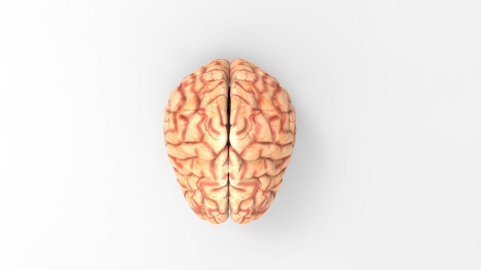 Brain Texture Free Free 3d Model Max Obj Fbx Ma Mb