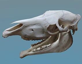 3D model Full Horse Skull