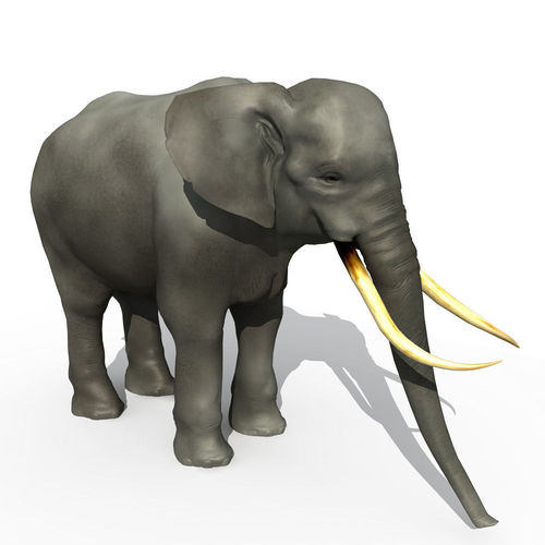 Asian Elephant3D model