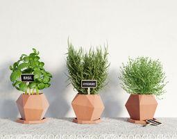 plant 41 am141 3D