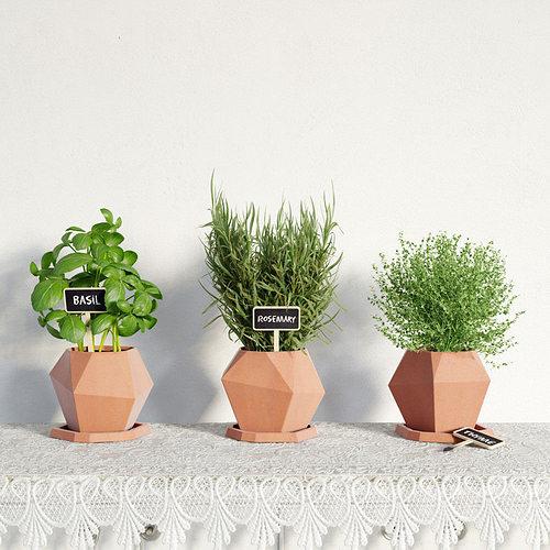 plant 41 am141 3d model obj mtl 1