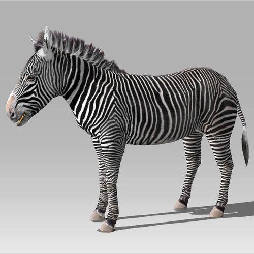 Zebra 3D Model3D model