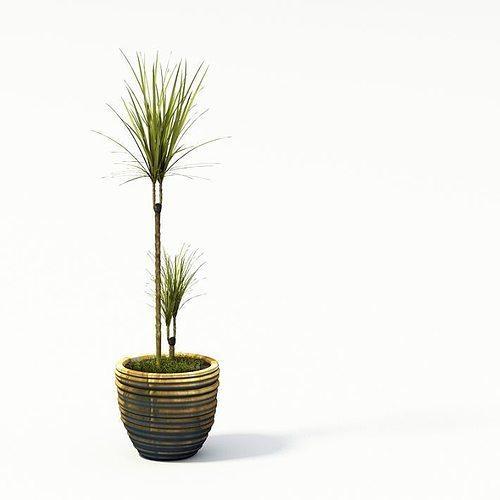plant 24 am24 3d model  1