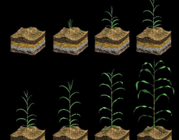 3d animated corn growth plant stages with ground