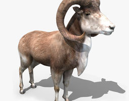 Goat Rigged 01 3D model