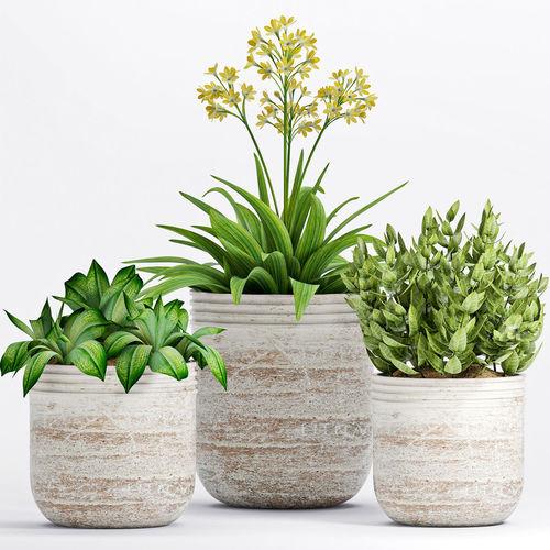 decorative plant set-11 3d model max obj mtl 1