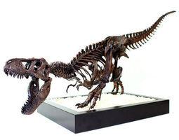 3D printable model Dinosaur Skull