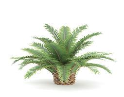 3d animated queen sago plant