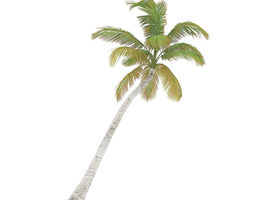 3d animated sloping palm tree