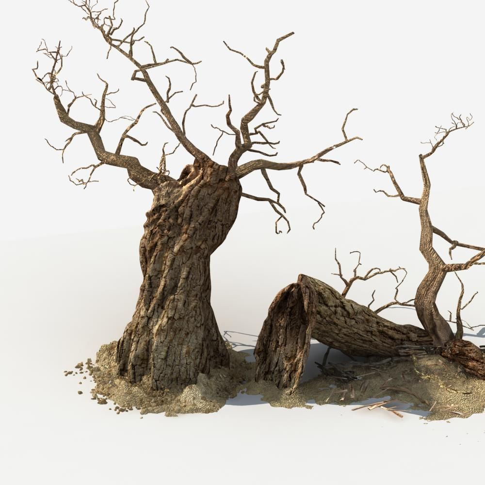 Dry Tree 04 3d Model Max Fbx Cgtrader Com