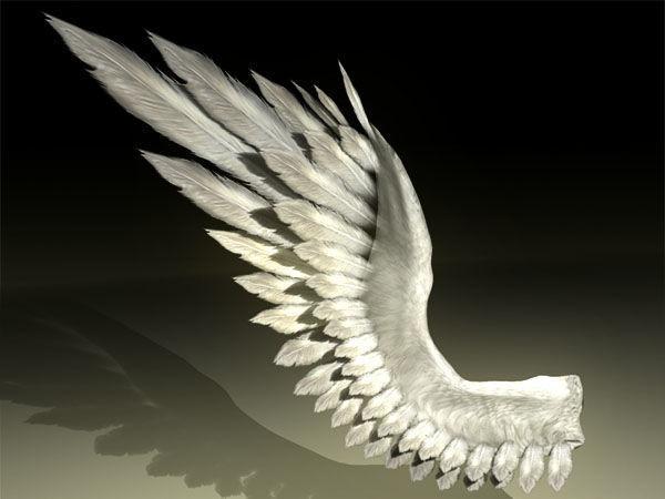bird angel wing 3d model rigged max obj mtl 3ds fbx ma mb 1