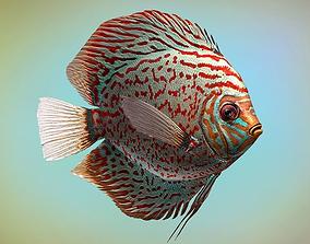 3D asset animated Fish Symphysodon discus