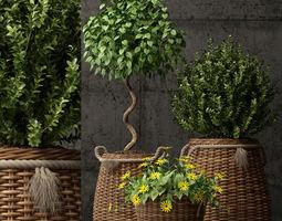 Plants collection 65 3D model