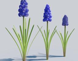 Grape Hyacinth Spring Bulb Flowers 3D