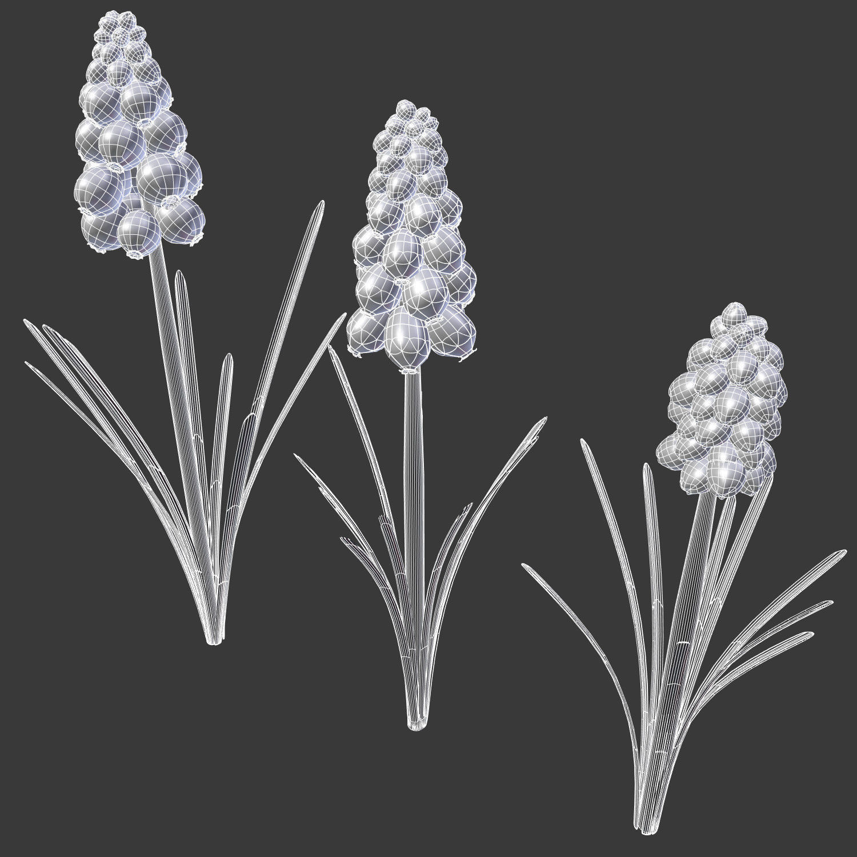 Grape Hyacinth Spring Bulb Flowers 3d Cgtrader