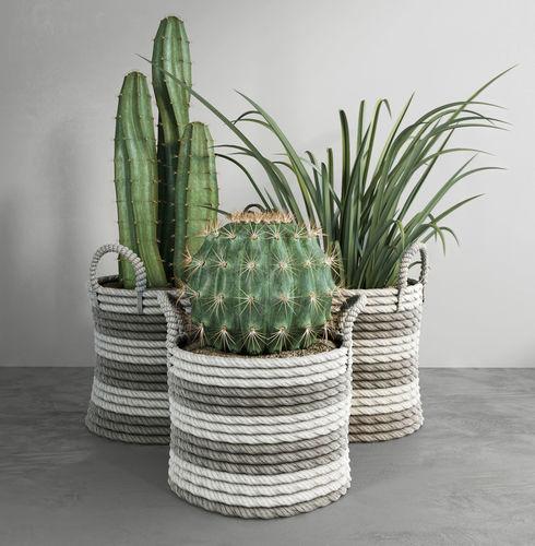 cactus set 3d model max fbx 1