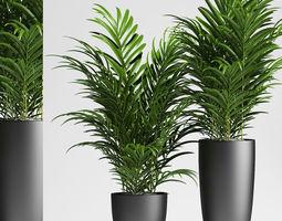 3D palm plants 137