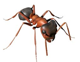 Ant Rigged 3D