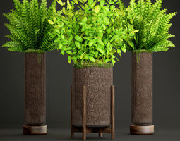 3D Potted plants fern
