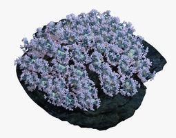 3D model marine Coral