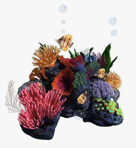 Coral 053D model