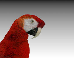 Red Macaw Parrot animated 3D Model