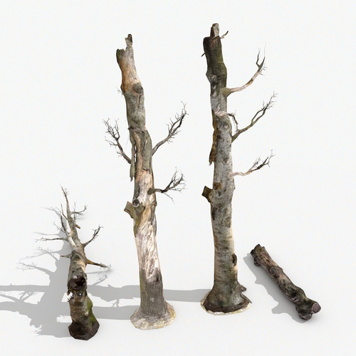 dead trees collection  3d model low-poly max obj mtl 3ds fbx c4d dae 1