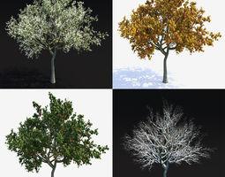 3D Apple Tree 2 Vray