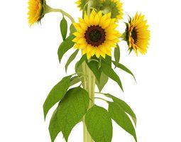 3D asset Sunflower