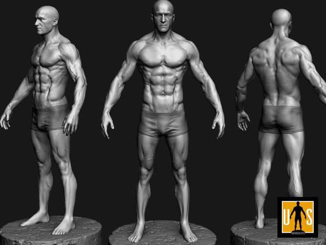 male anatomy study 3D printable model | CGTrader