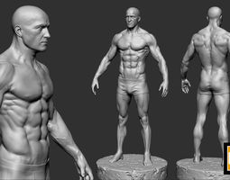 male anatomy study 3D printable model