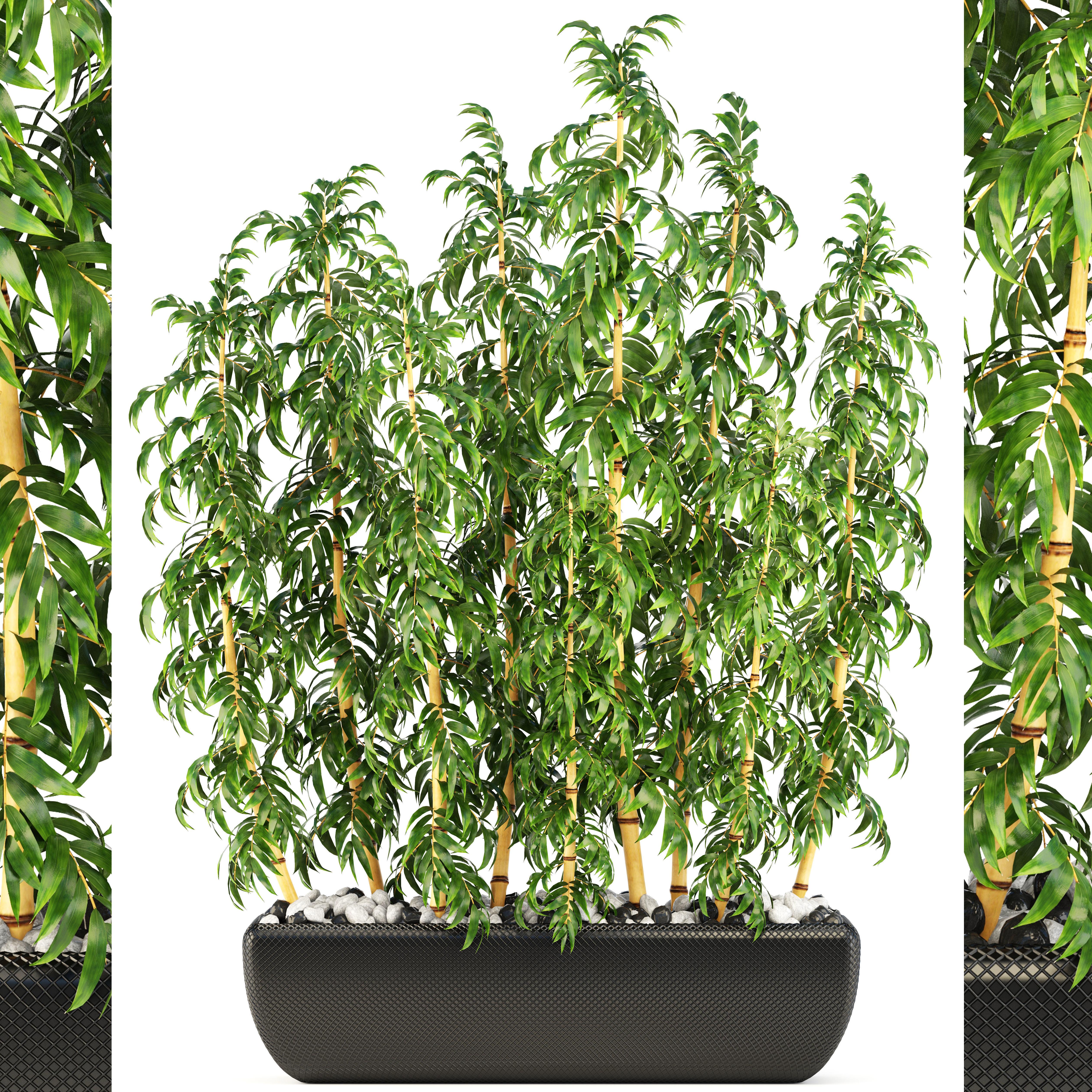 3d Model Pot Plant Golden Bamboo Trees Cgtrader
