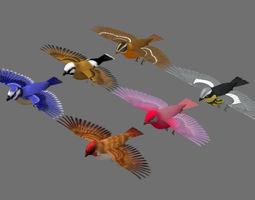 3D birds bird