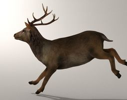 Game Ready Deer Model 3D asset