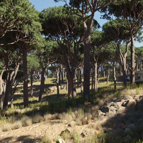 umbrella pine trees | 3D model