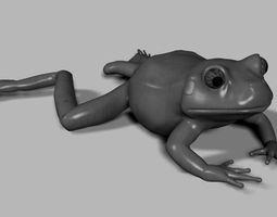 Frogs 3D asset
