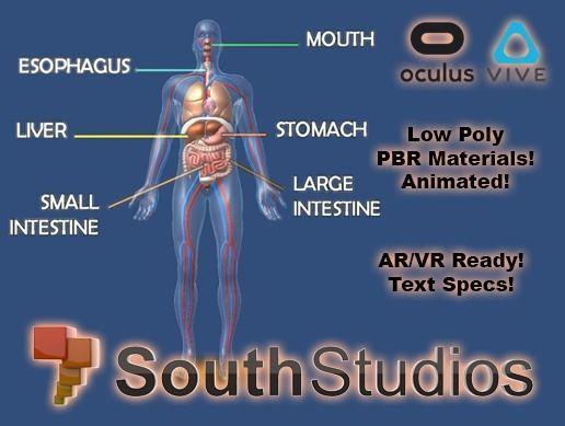 Animated Human Body Digestive System AR VR Unity 3dsmax
