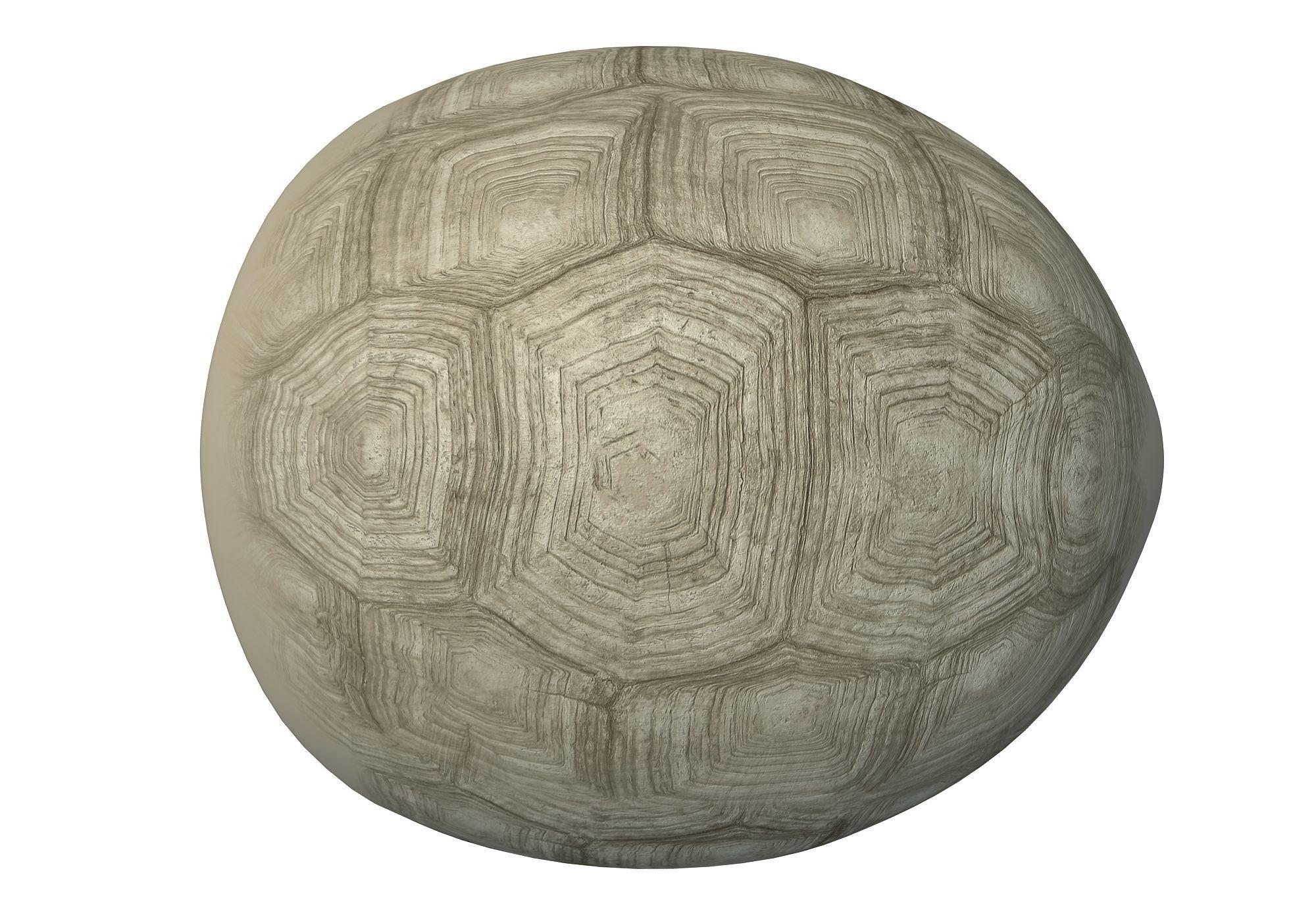Tortoise Shell Skeleton 3d Asset Cgtrader