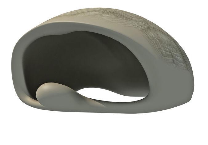 tortoise-shell-skeleton-3d-model-low-pol