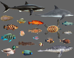 Low poly Fish Collection Animated - Game Ready 3D asset 2
